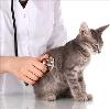 Ветеринарные клиники в Реже